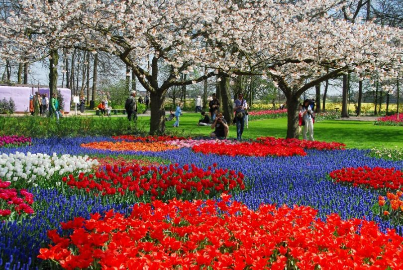 keukenhof como visitar o jardim das tulipas na holanda conex o amsterdam. Black Bedroom Furniture Sets. Home Design Ideas