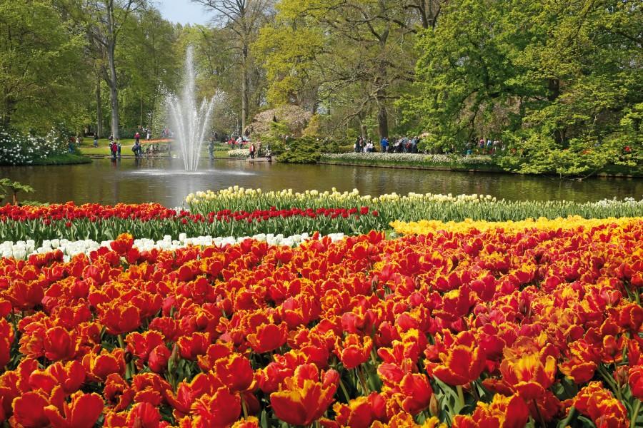 Keukenhof como visitar o jardim das tulipas na holanda for Jardin keukenhof 2015