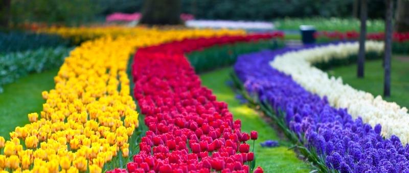 ingresso para o parque das tulipas keukenhof