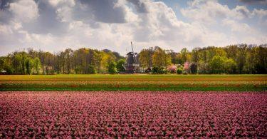keukenhof-na-holanda-jardim-das-tulipas-10
